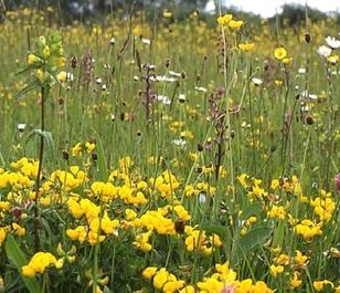 BS3P 100%: Dry, Sandy & Loam Soils Wildflower Seeds