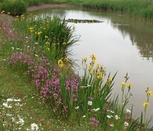 BS6P 100%: Wetland & Pond Edge Wildflower Seeds