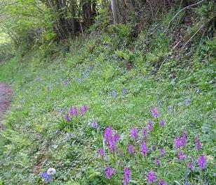 BS8M: Woodland & Heavy Shade Wildflower Seeds