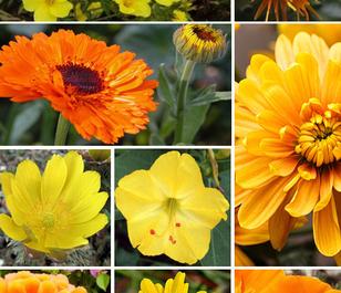 ColourMax 3 - Summer Sunshine