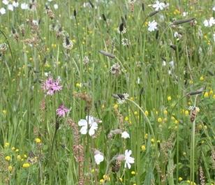 BS4M: Loam & Alluvial Soils Wildflower Seeds