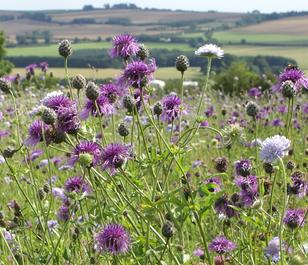 BS5P 100%: Heavy Clay Soils Wildflower Seeds