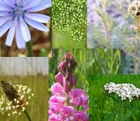 BS Mixed Herbs