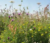 BS14P 100%: Wild Bird Wildflower Seeds