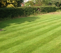 Back Garden Play Lawn Grass Seed
