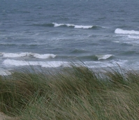 BS Coastal Sites - Salt Tolerant Grass Seed