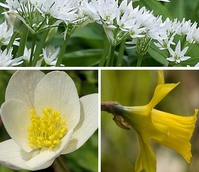 BS Favourite Wildflower Bulbs 'In The Green' Collection