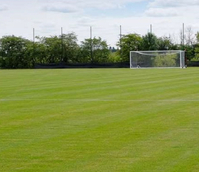 BS Premier Pitch Grass Seed