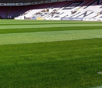 BS Premier Pitch Renovator Grass Seed