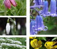 BS Wildflower Bulb Collection