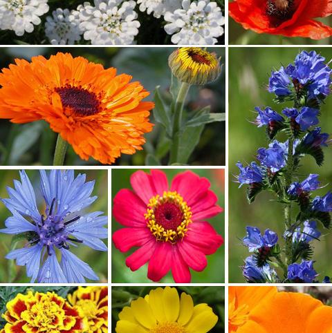 ColourMax 7 - Annual Summer Bee
