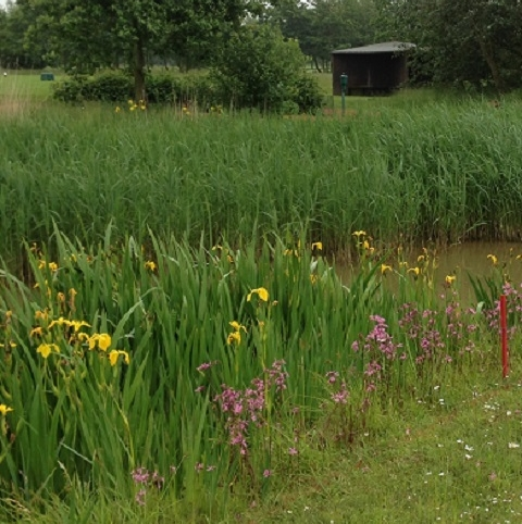 BS6M: Wetland & Pond Edge Wildflower Seeds