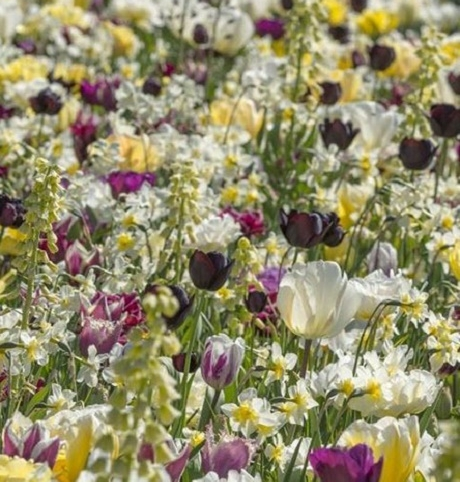 Joy of Spring Bulb Collection