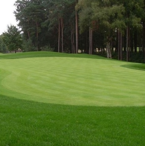 BS Premier All Fescue Greens Grass Seed
