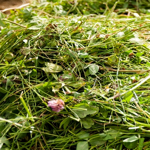 BS Aber High Sugar Grass Seed with Red Clover - Medium Term 3-4 Year Ley