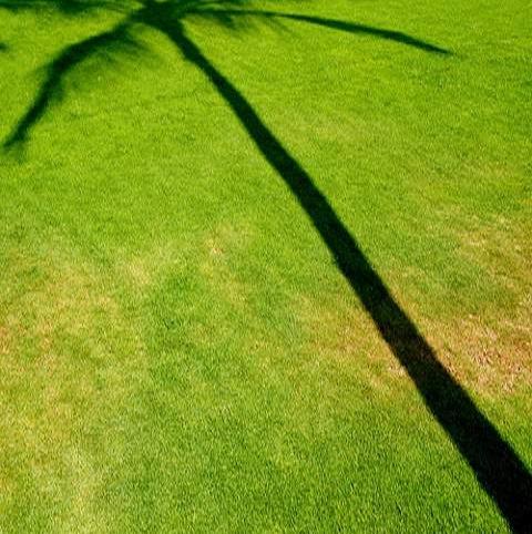 BS Mediterranean Lawn Seed