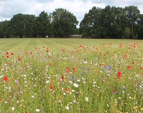 Enriched Wildflower Turf