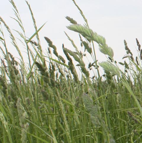 CSS11 Species Rich Wild Grassland Mix AB3