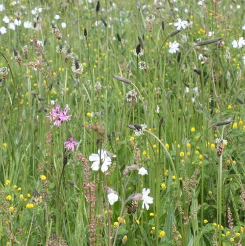 BS4M: Loam & Alluvial Soils Wildflower Seeds