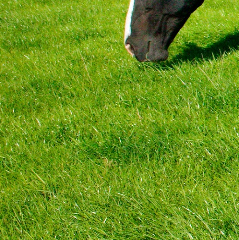 BS Triple 'H' without Ryegrass Paddock Grass Seed