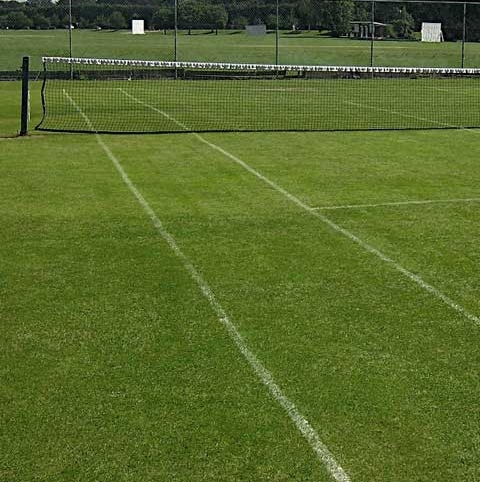 BS Cricket and Tennis Grass Seed