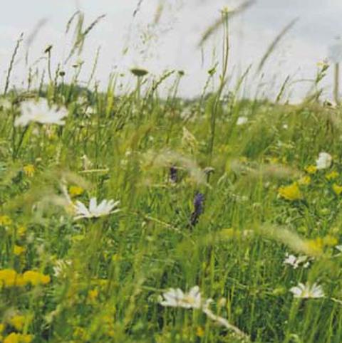 BS5M: Heavy Clay Soils Wildflower Meadow Seeds